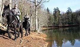 Come diventare Guardia forestale: formazione, concorsi, carriera
