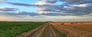 Roma: corso gratuito Marketing settore Agroalimentare