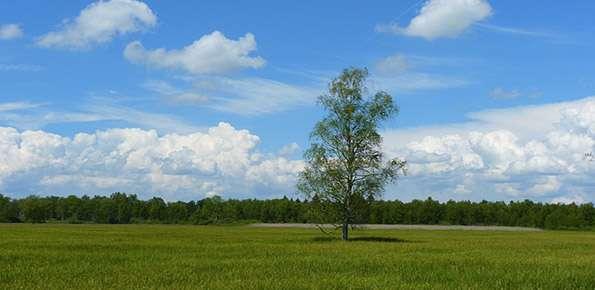 Paesaggio, alberi