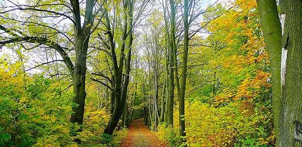 Foresta Alberi