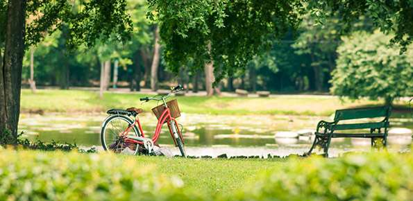 Parco Verde Alberi S