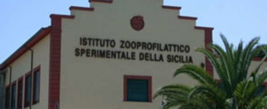borse-ricerca-sicilia_Fotor