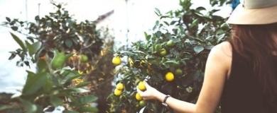 Sicilia: corsi gratuiti Agricoltura agrumi