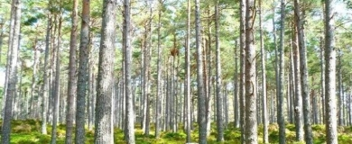 alberi foresta