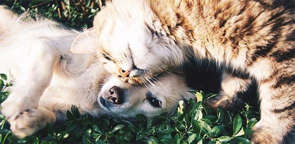 cane, gatto, animali