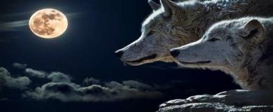 Life Wolfalps: concorso creativo Lupi in Città