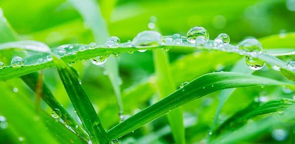 parco, erba, prato, ambiente