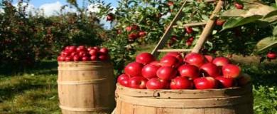 azienda agroalimentare prodotti agricoli