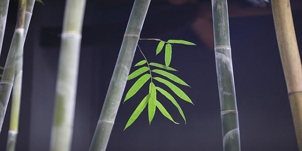 bambu, concorso, design
