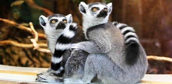 zoo, giardino zoologico, bioparco, animali
