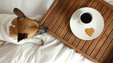 cane, animali, hotel