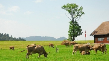 lavoro, fattorie, svizzera